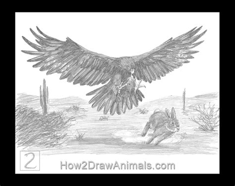 Special Golden Eagle Hunting a Rabbit Drawing