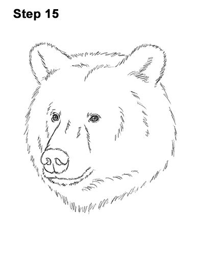 How to Draw a Bear (Head Detail) VIDEO & Step-by-Step Pictures