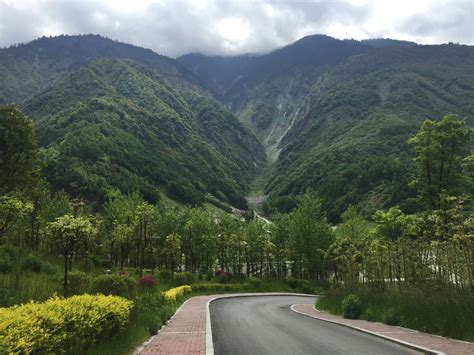 Survival and restoration of China's native forests